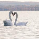 困難な統合と失われた結婚