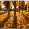 金色の木になる種のワーク